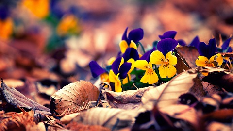 floare_0.jpg